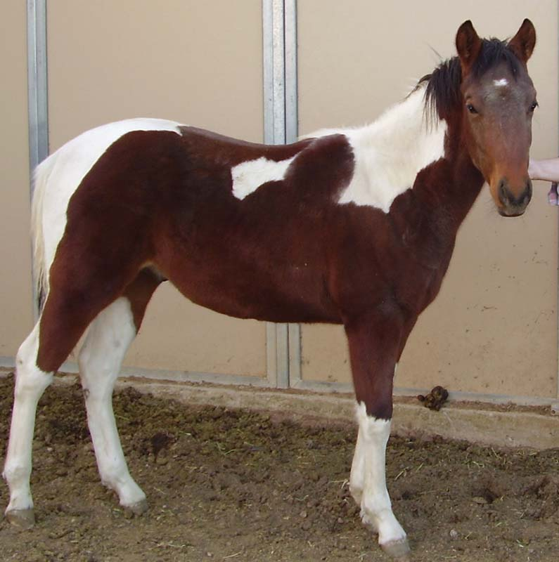 PB220004.JPG Star Dreamhorse